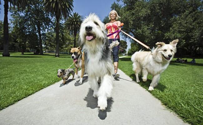 Normas sobre animais de estimação